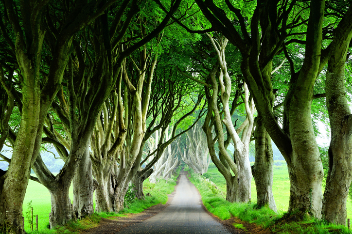 Dark Hedges of Northern Ireland, view of road through tunnel of trees