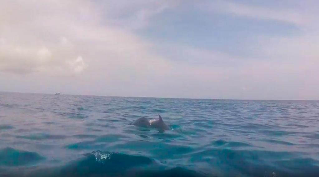 Delfines Tumbatu