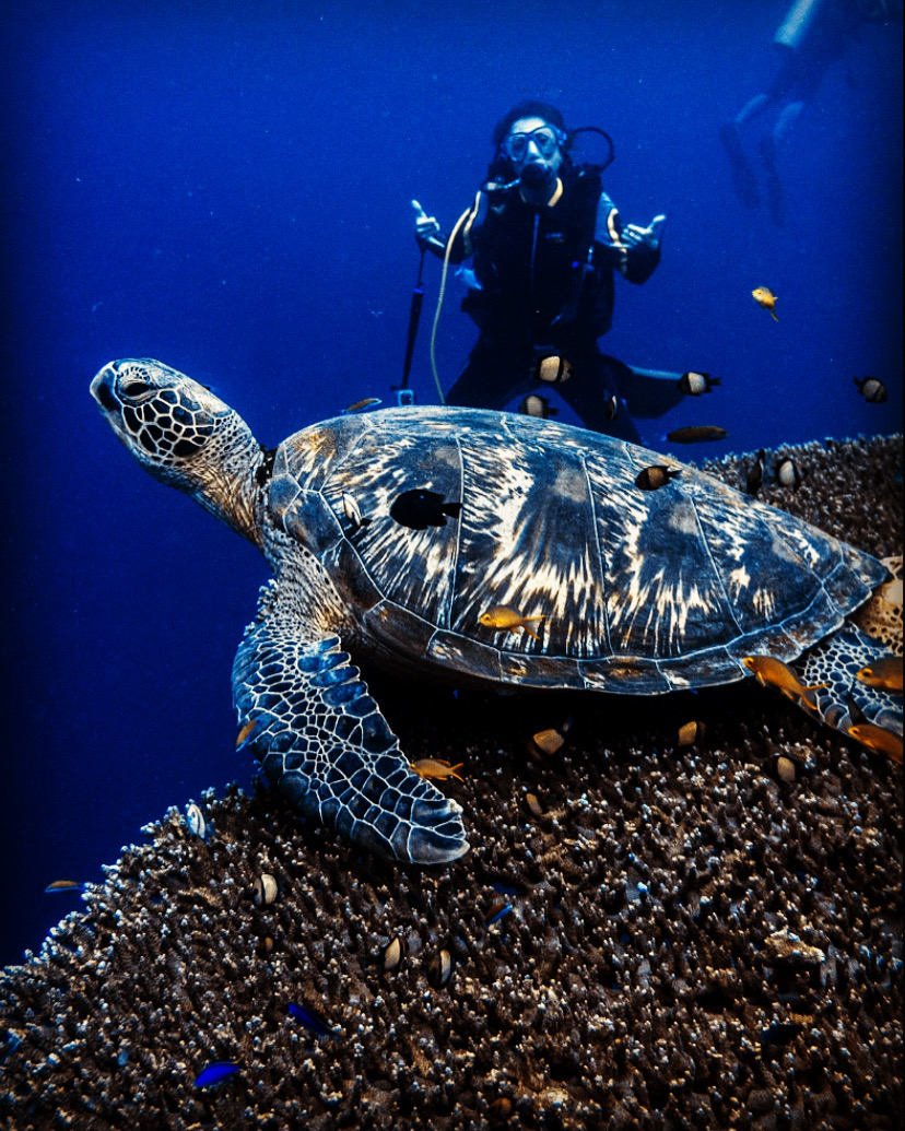 Moalboal buceo tortuga